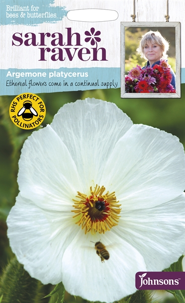 Sarah Raven Wildlife Flowers Argemone platycerus Prickly Poppy seed