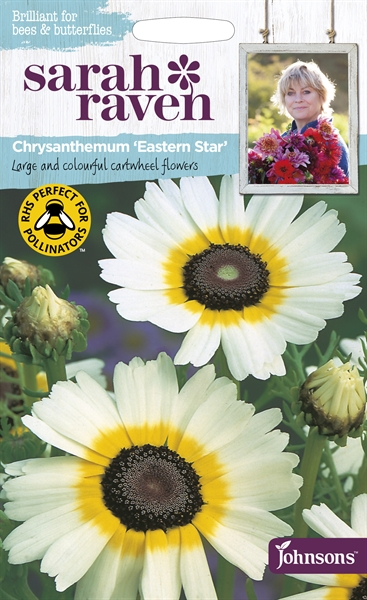 Sarah Raven Wildlife Flowers Chrysanthemum Eastern Star seed