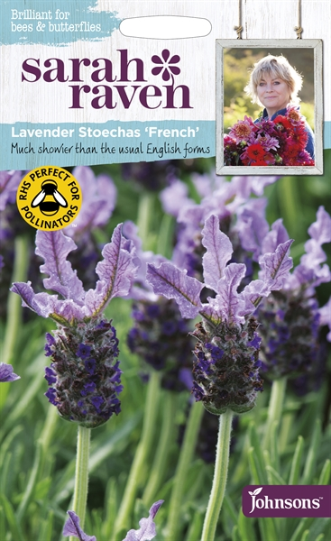 Sarah Raven Wildlife Flowers French Lavender Stoechas seed