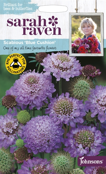 Sarah Raven Wildlife Flowers Scabious Blue Cushion seed