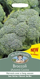 Broccoli Autumn Covina Seed
