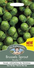 Brussels Sprout Brodie F1 Seed