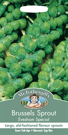 Brussels Sprout Evesham Special Seed