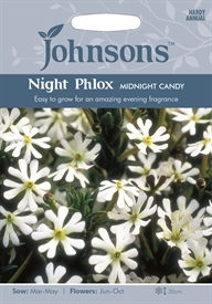 Night Phlox Midnight Candy