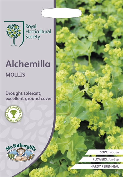 RHS ALCHEMILLA mollis (Ladies Mantle) Seed