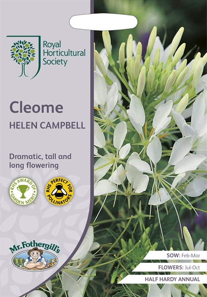 RHS CLEOME Helen Campbell (Spider Flower) Seed