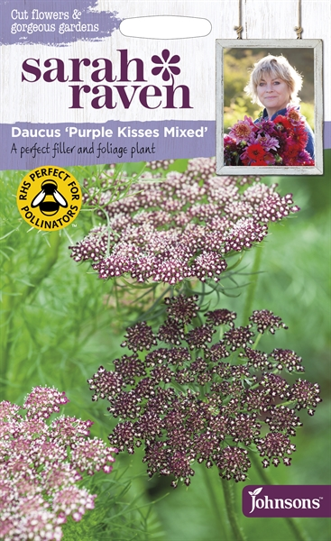 Sarah Raven Cut Flowers Daucus Purple Kisses Mixed seed