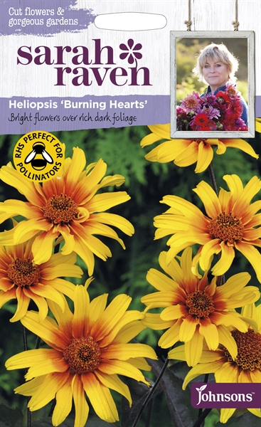 Sarah Raven Cut Flowers Heliopsis Burning Hearts seed
