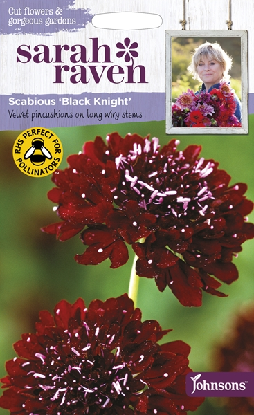 Sarah Raven Cut Flowers Scabious Black Knight seed