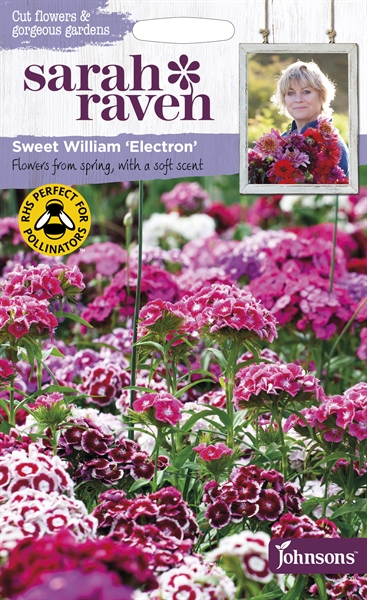 Sarah Raven Cut Flowers Sweet William Electron seed